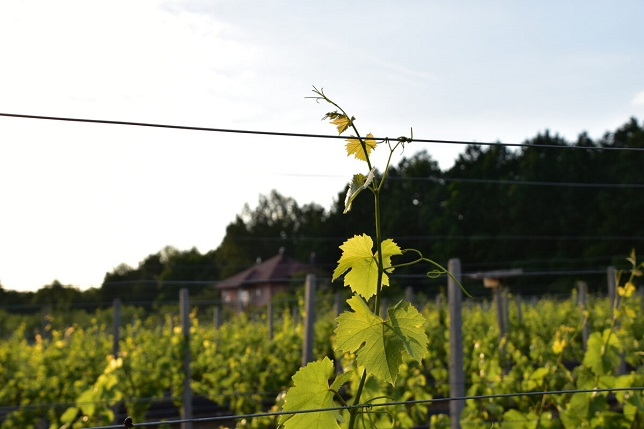 Winnica Rajska